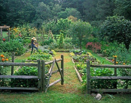 Edible Garden Ideas gardening and landscaping Casual Kitchen Garden