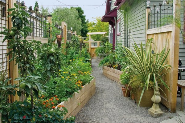 driveway turned edible garden