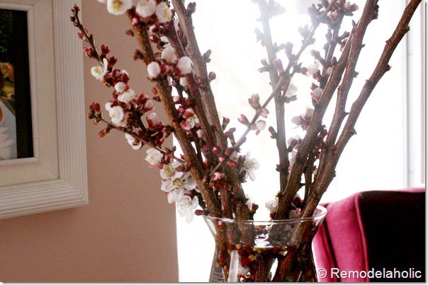 How to Force Branches to Bloom