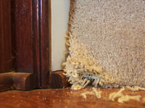 5 How To Remove Carpet From Stairs, By Cleverly Inspired, Featured On @Remodelaholic
