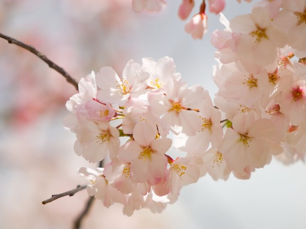 spring flowers (4)