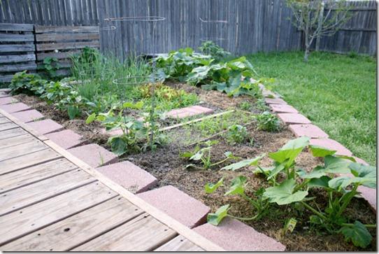 garden (10)
