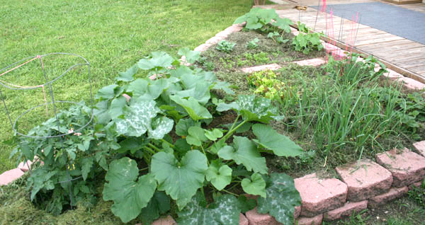 Texas gardening