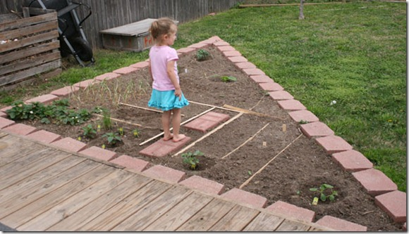 planting garden (12)