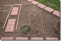 planting garden (5)