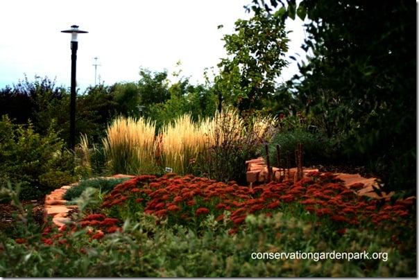 Grasses and Autumn Joy Sedum