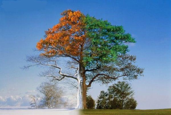 Remodelaholic Season Change