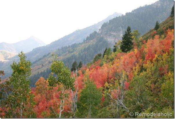 Celebrate! Fall Season Ideas!