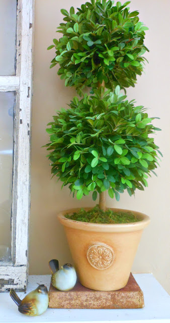 Walnut and Divine topiary