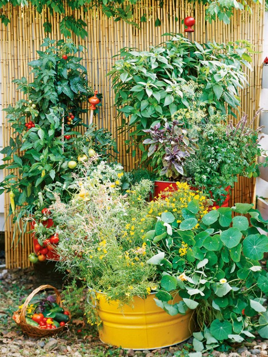 Bhg container garden ideas native home garden design - Container gardening ...