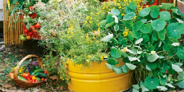 Get Your Green Thumb On…It's Garden Time!