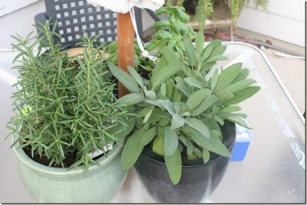 Remodelaholic herbs on table