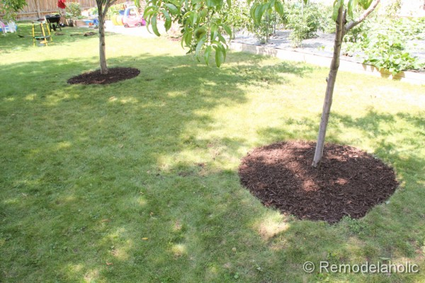 Mulch Weed Control Around Trees final images-2
