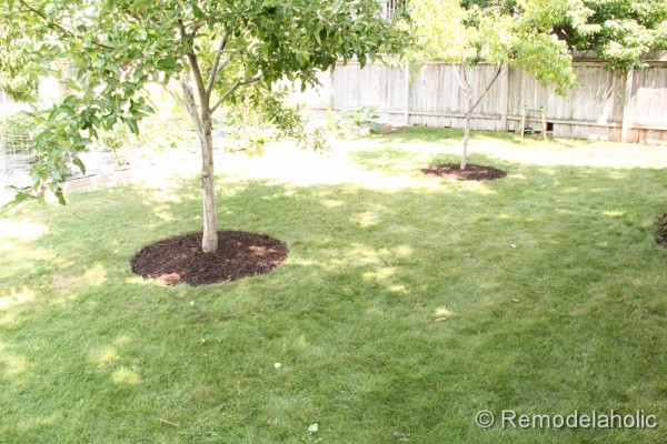 Mulch Weed Control Around Trees