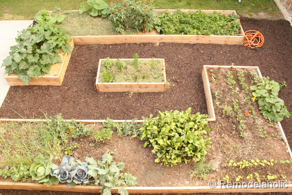 How To Build Garden Boxes - Step By Step Instructions - The Recipe