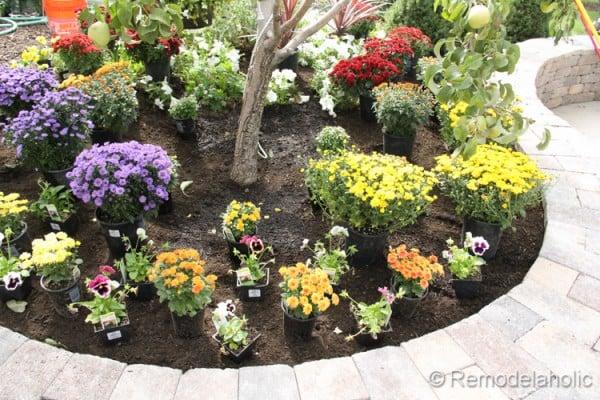 Planting Fall Flowers