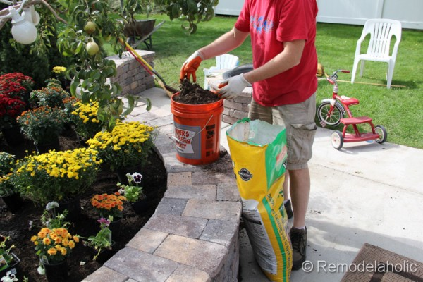 planting fall flowers-13