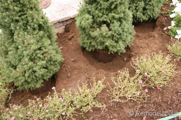 planting fall flowers-4
