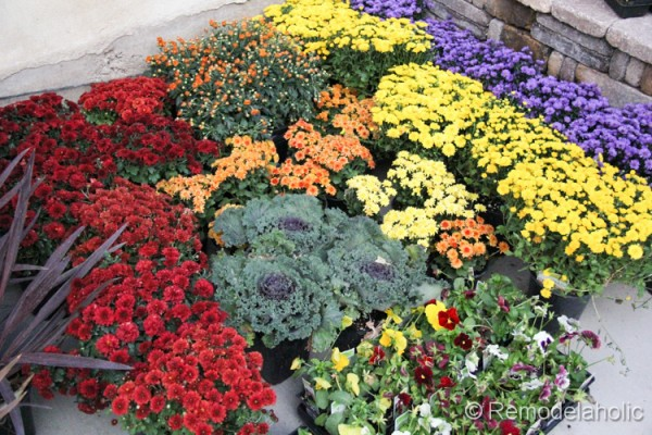 let?s do this planting fall flowers  construction  haven home, Natural flower