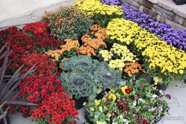 planting fall flowers-5