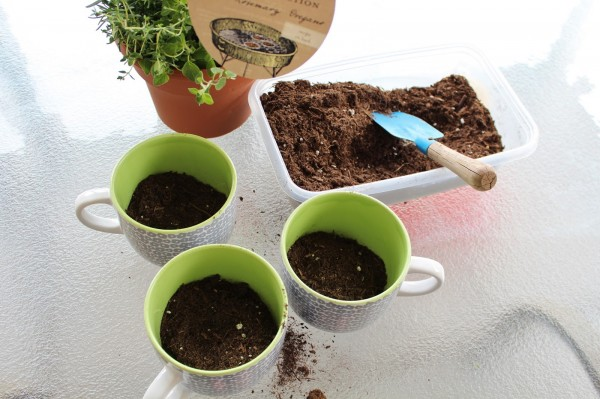 coffee mug herb garden, House For Five featured on Remodelaholic
