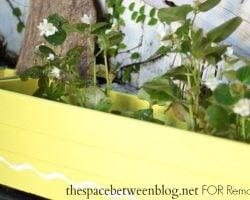 bold color planters