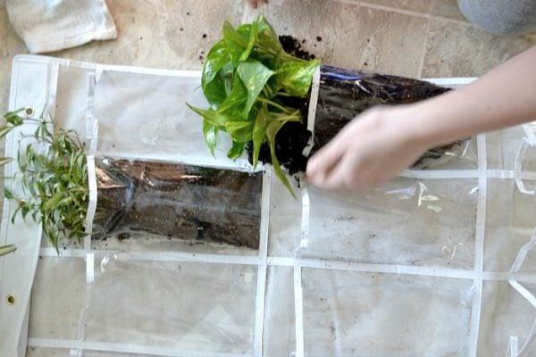 vertical plant hanger filling.