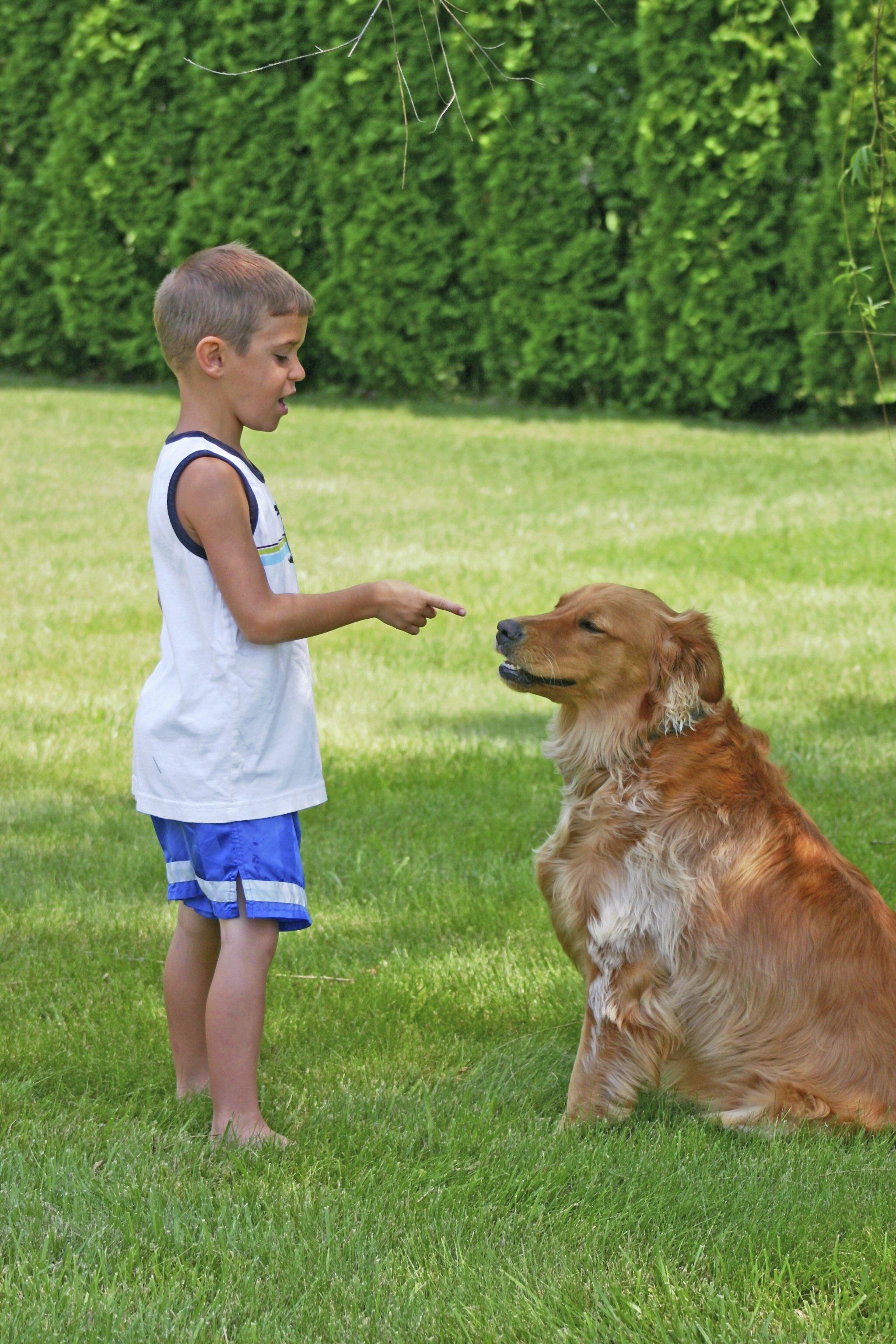 The Basics of Dog Obedience Training