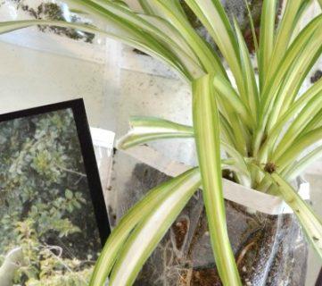 Vertical Hanging Indoor Planter
