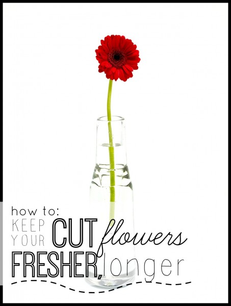 How To Keep Your Cut Flowers Fresher Longer