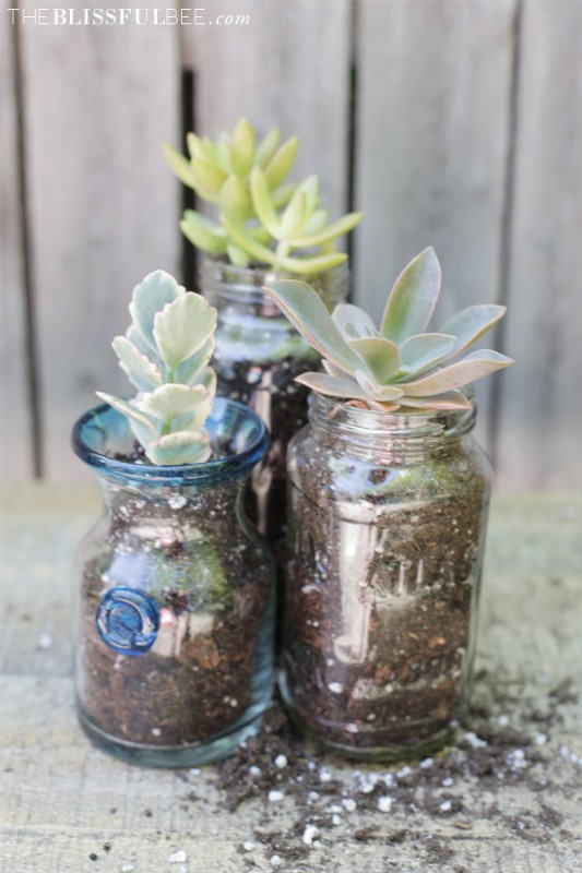 succulent planter jars