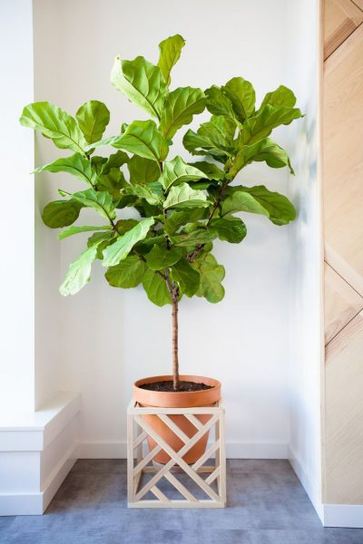 Modern Cube Plant Stand With Optional Fretwork