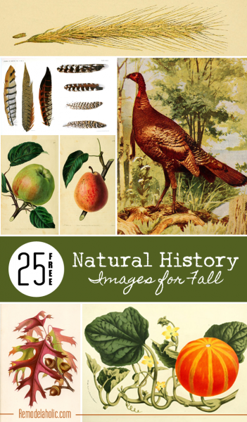 25 Free Natural History Images for Fall   Remodelaholic.com #free #printables #art