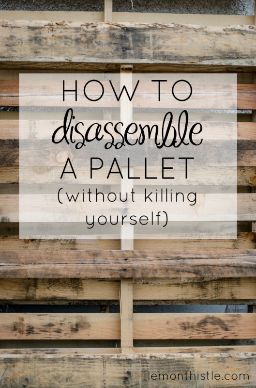how to disassemble a pallet, Lemon Thistle