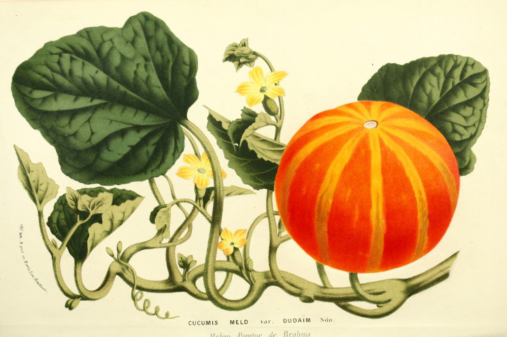 Remodelaholic | 25 Free Vintage Nature Images for Fall