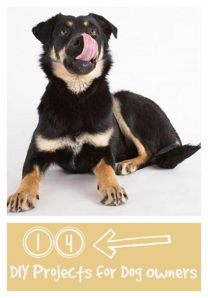tipsaholic dog
