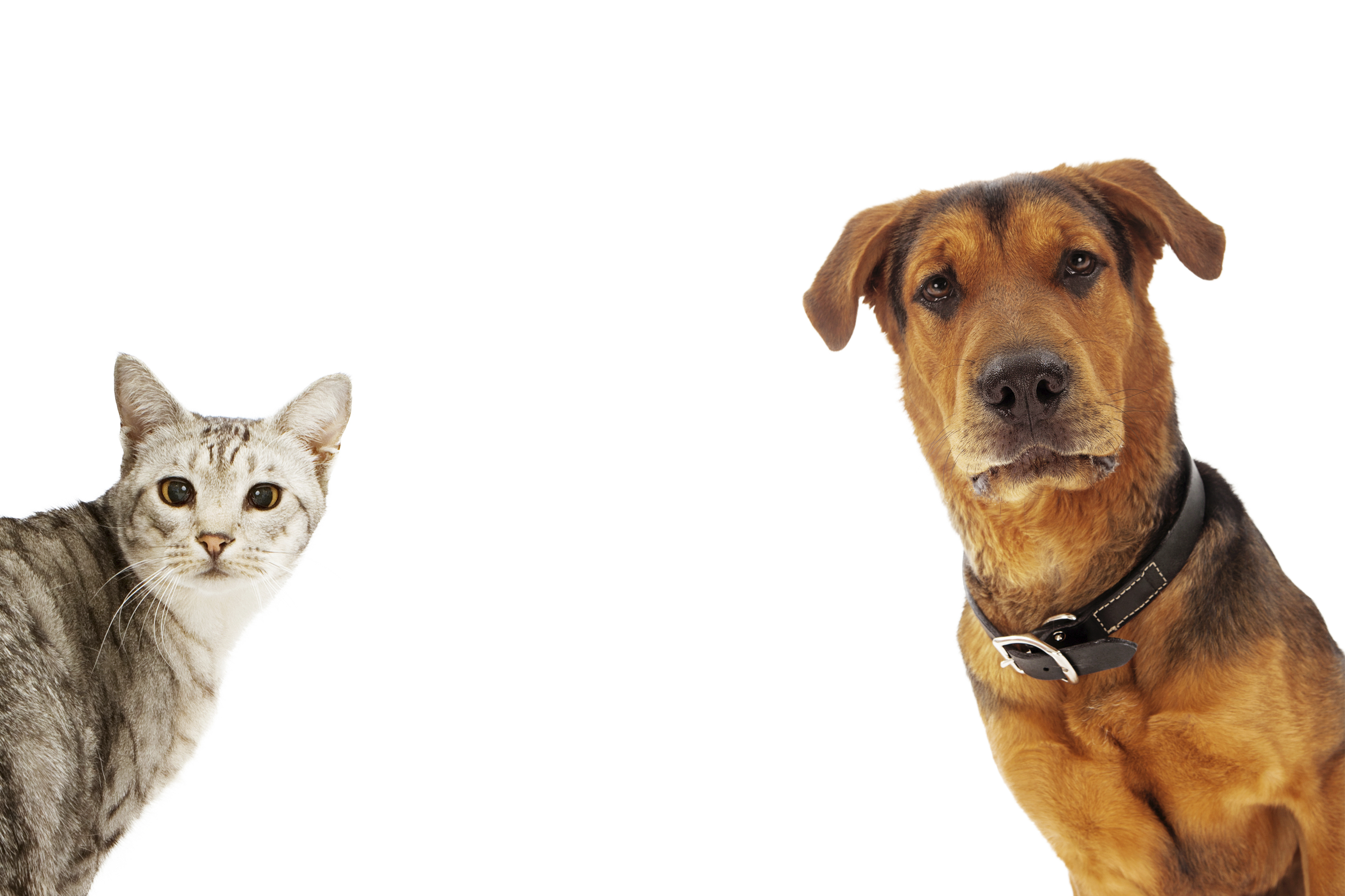 8 Best Products for Dogs and Cats
