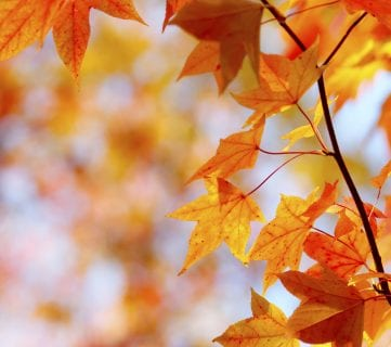 Try These 10 Fun DIY Projects With Leaves