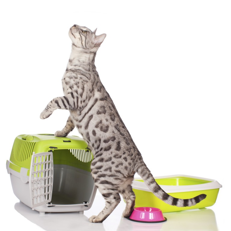 Are cats attracted to litter boxes