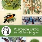 Over 25 Free Vintage Bird Printable Images | Remodelaholic.com #art #free #printable