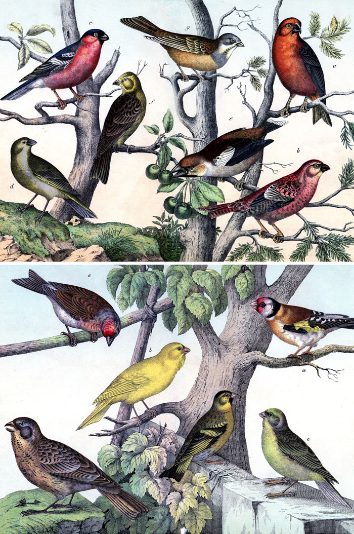 It's just a photo of Resource Printable Bird Pictures