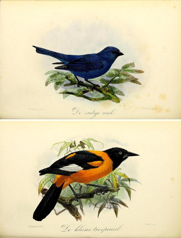 Fabulous Over Free Vintage Bird Printable Images Remodelaholic art free