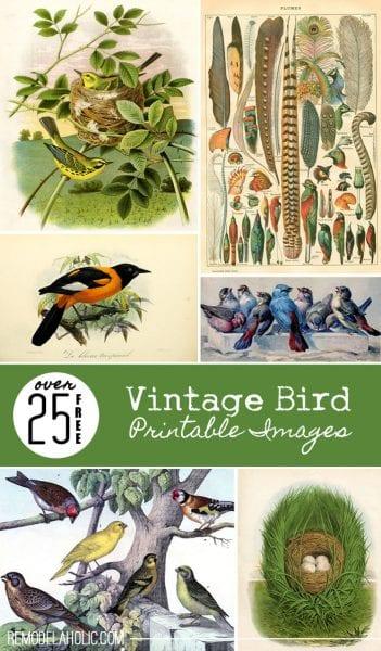 25 Free Vintage Bird Printable Images