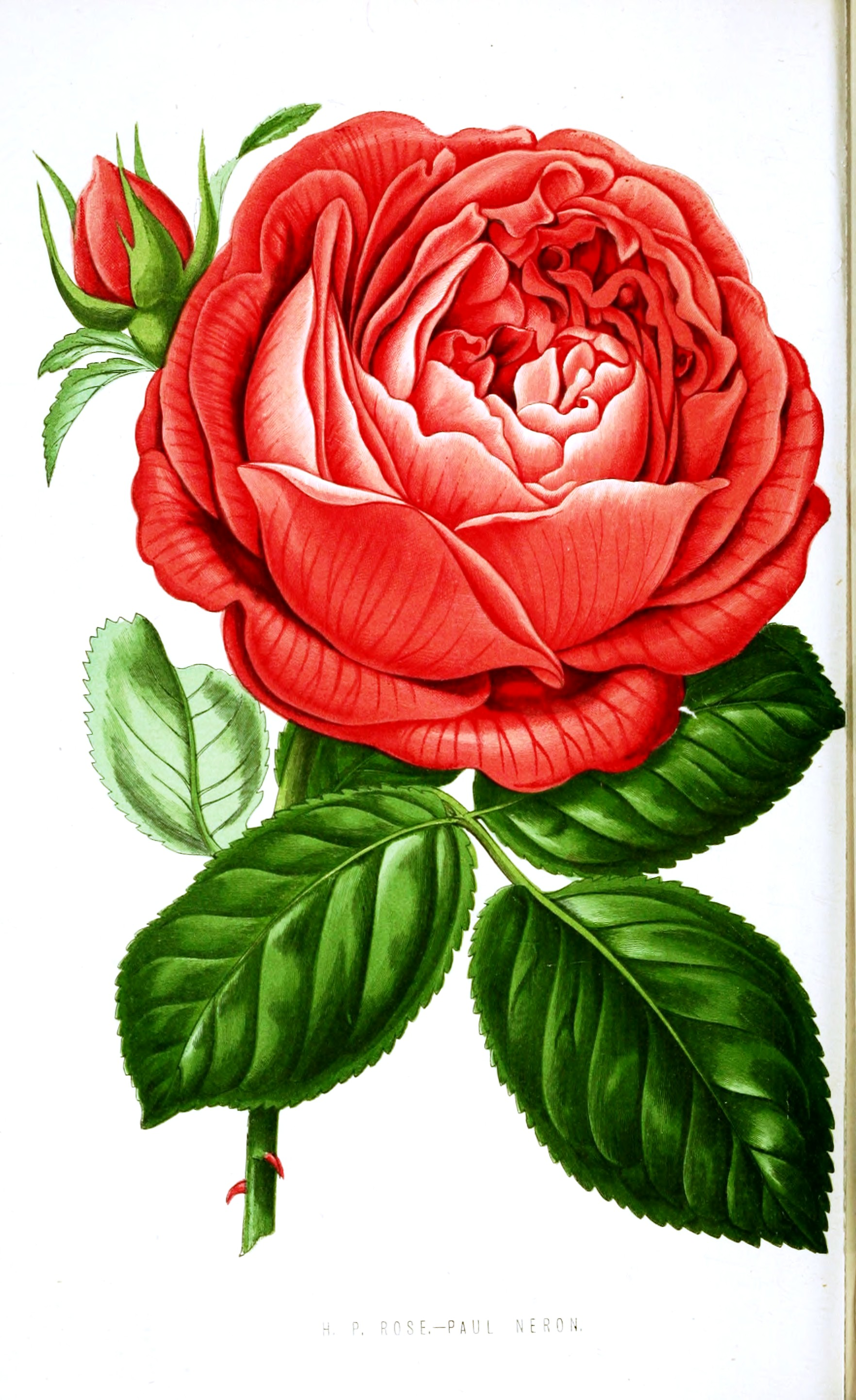 It is a graphic of Revered Free Floral Printables