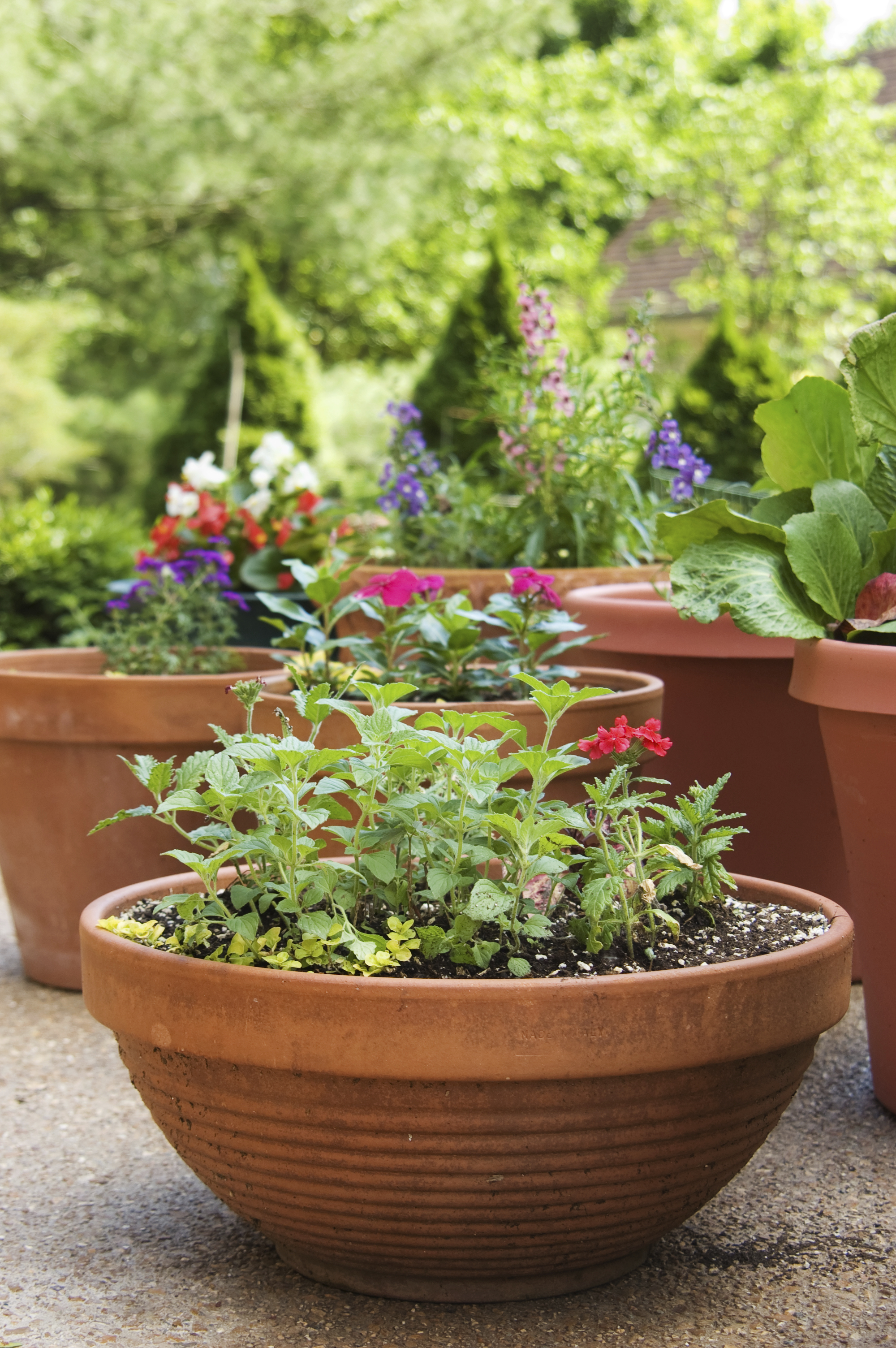 Remodelaholic How To Create The Perfect Container Garden