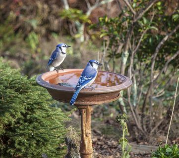 12 Fun and Easy DIY Birdbath Ideas