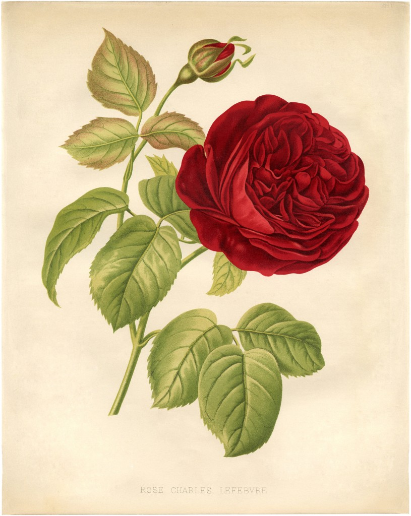 250 Restored HIGH RES Print-Making Images Collection ANTIQUE FLORAL PRINTS