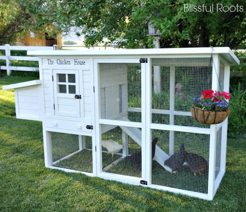 Cute DIY chicken coop by Blissful Roots