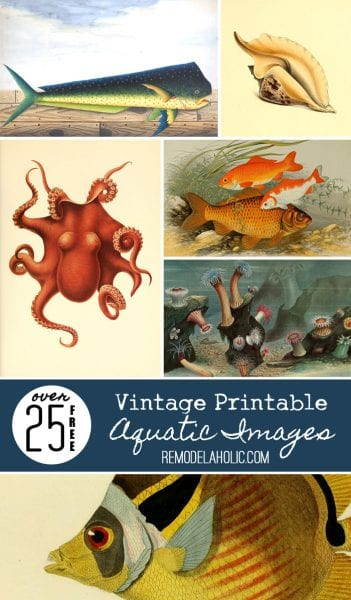 25+ FREE Vintage Printable Aquatic Images via Remodelaholic.com #printable #ocean #coastal