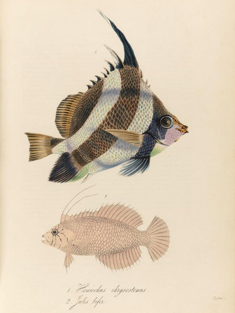 Remodelaholic | 25+ Free Printable Vintage Aquatic Images
